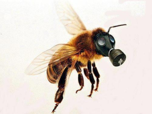 Bayer AG Makes Bee Contraceptives