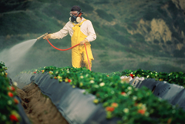 Killing Us Softly—Glyphosate Herbicide or Genocide?